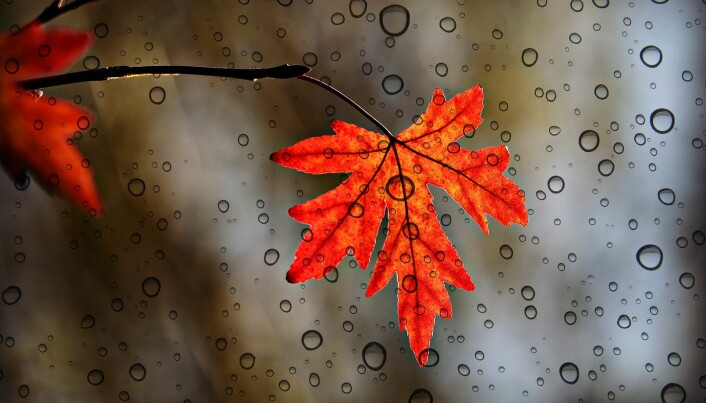 Blader høst løb