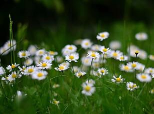 Foto fra pixabay, blomster