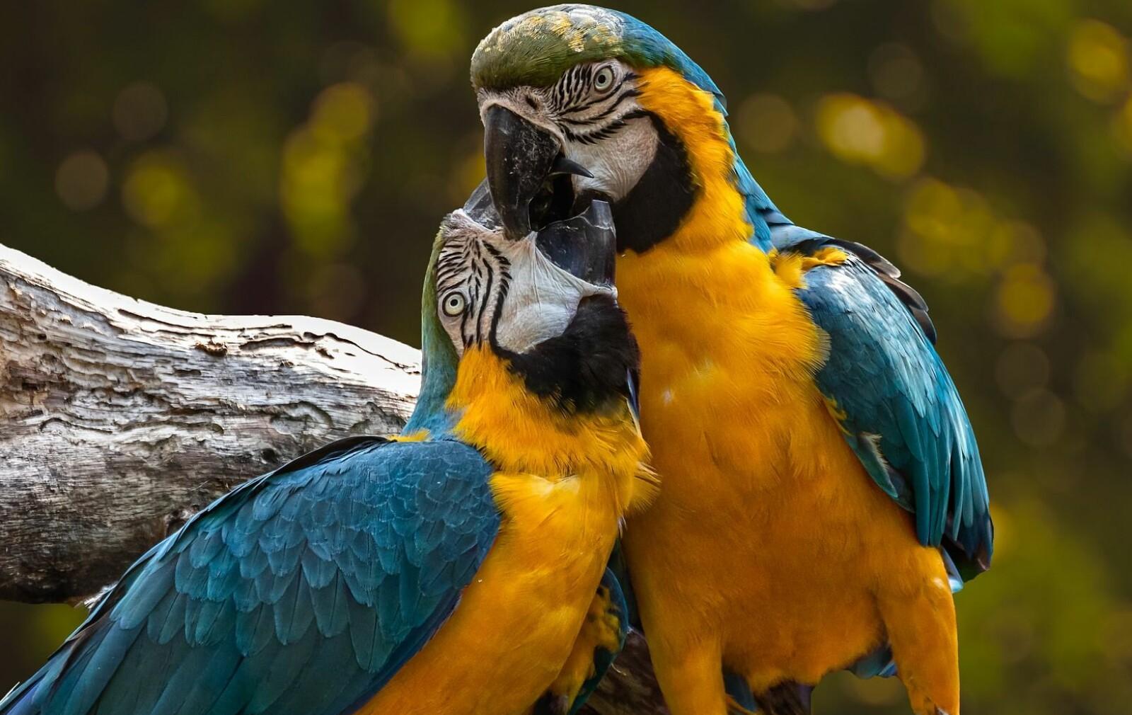 fugler fra pixabay.com