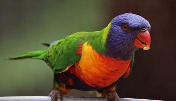 En bild på en papegoja.