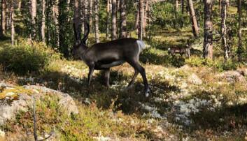 Storlia naturreservat med flere vassdrag som er lite påvirket av menneskelig aktivitet innlemmes også i nasjonalparken