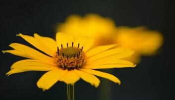 Flower, Photo Pixabay